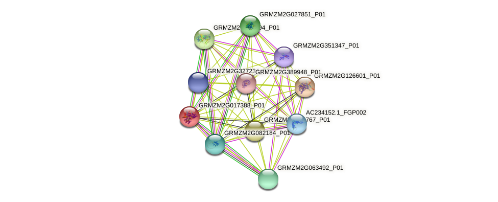 GRMZM2G017388_P01 protein (Zea mays) - STRING interaction network