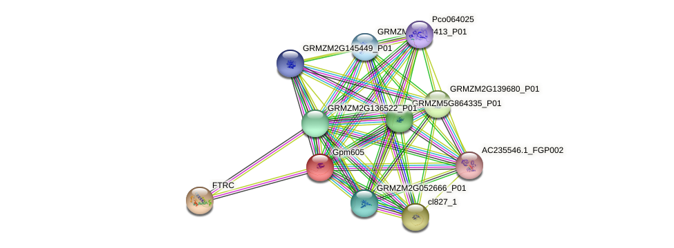 gpm605 protein (Zea mays) - STRING interaction network