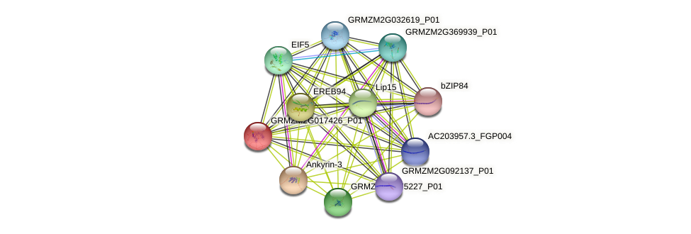 GRMZM2G017426_P01 protein (Zea mays) - STRING interaction network