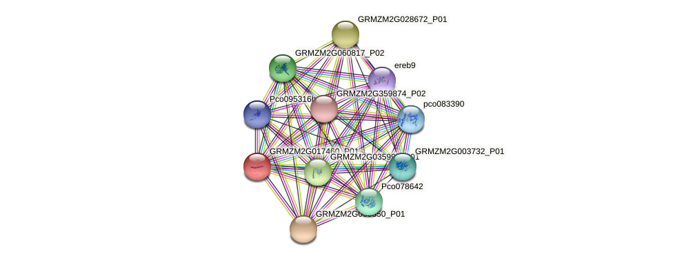 Zm.5406 protein (Zea mays) - STRING interaction network