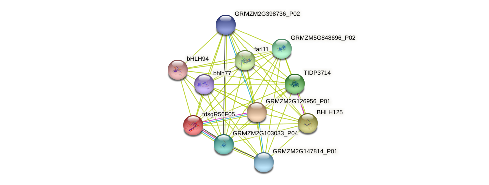 GRMZM2G017636_P01 protein (Zea mays) - STRING interaction network