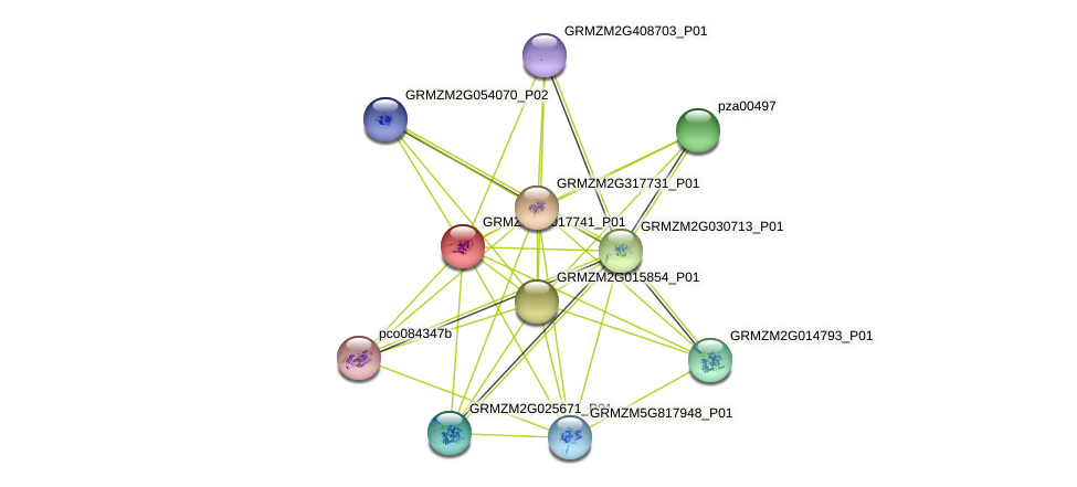 GRMZM2G017741_P01 protein (Zea mays) - STRING interaction network