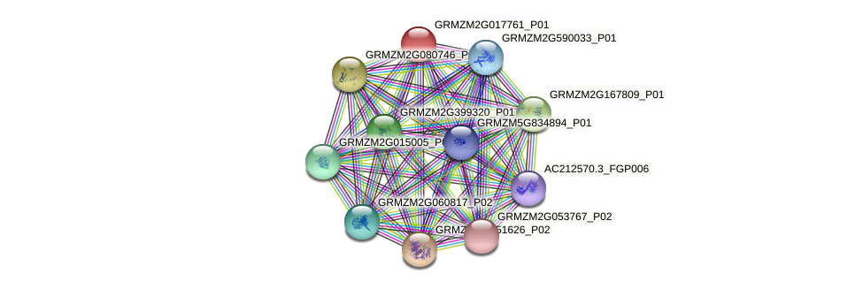 GRMZM2G017761_P01 protein (Zea mays) - STRING interaction network