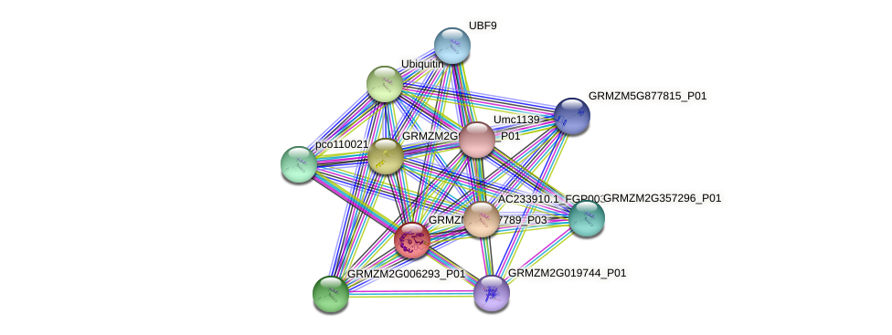 GRMZM2G017789_P03 protein (Zea mays) - STRING interaction network