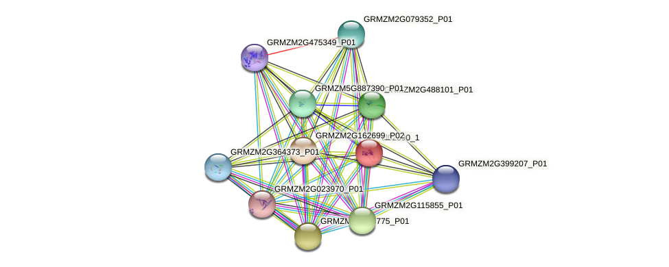 cl62390_1 protein (Zea mays) - STRING interaction network