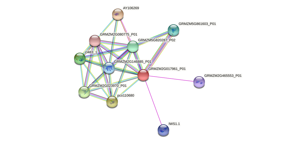 GRMZM2G017961_P01 protein (Zea mays) - STRING interaction network