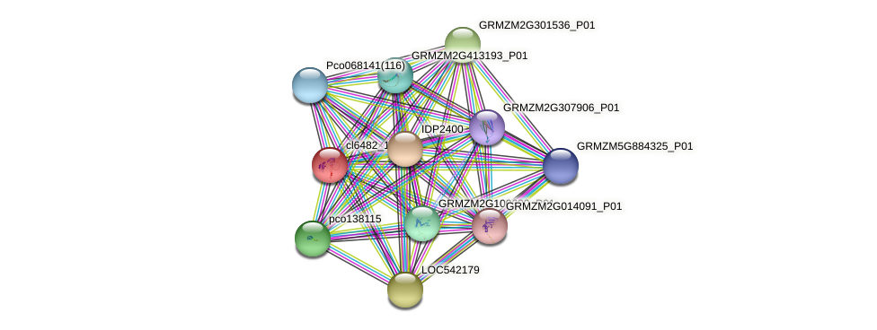 cl6482_1b protein (Zea mays) - STRING interaction network