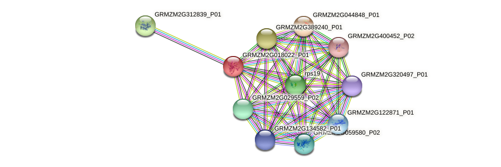 GRMZM2G018022_P01 protein (Zea mays) - STRING interaction network