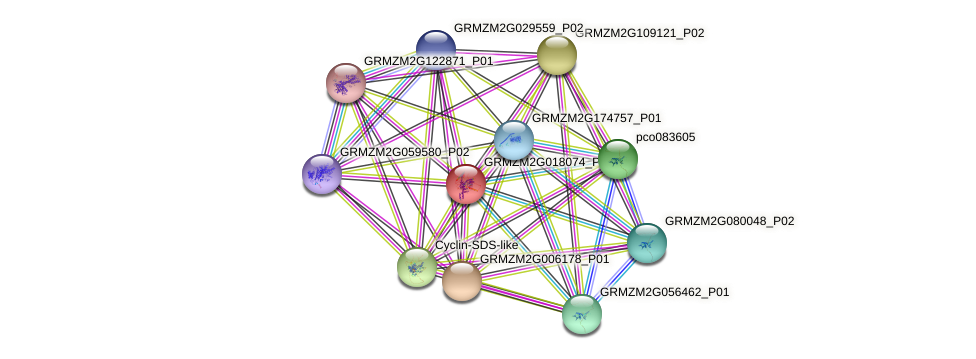 103632020 protein (Zea mays) - STRING interaction network