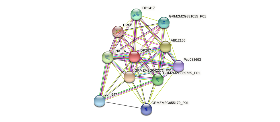 IDP267 protein (Zea mays) - STRING interaction network
