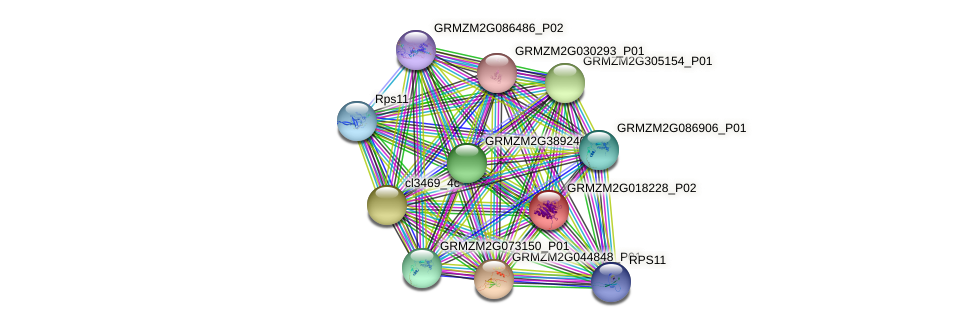 GRMZM2G018228_P02 protein (Zea mays) - STRING interaction network