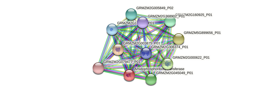 Zm.22181 protein (Zea mays) - STRING interaction network