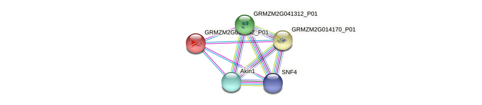 GRMZM2G018262_P01 protein (Zea mays) - STRING interaction network