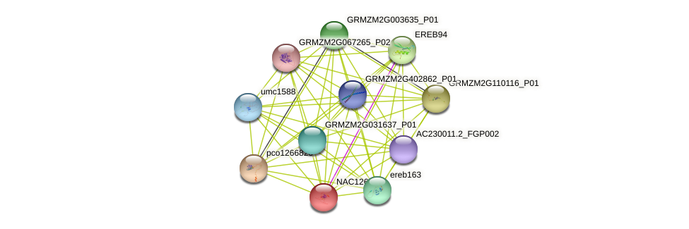 Zm.4179 protein (Zea mays) - STRING interaction network