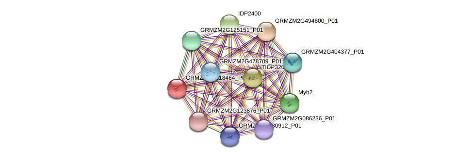 GRMZM2G018464_P01 protein (Zea mays) - STRING interaction network