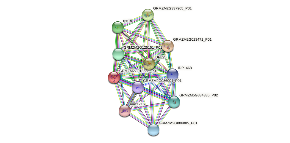 GRMZM2G018558_P01 protein (Zea mays) - STRING interaction network