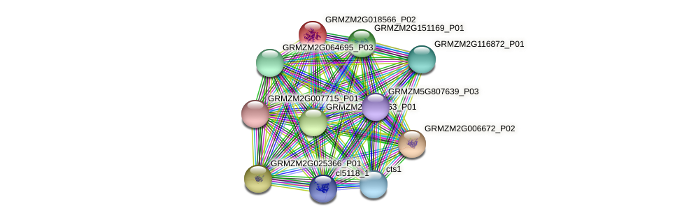 GRMZM2G018566_P01 protein (Zea mays) - STRING interaction network