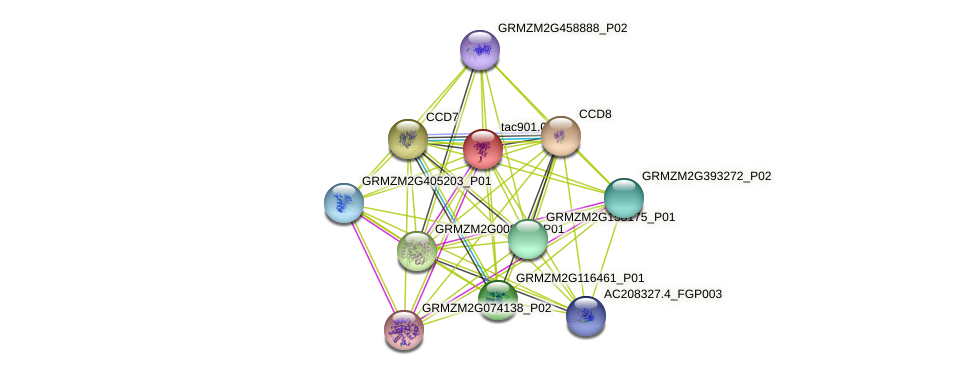 MAX1a protein (Zea mays) - STRING interaction network