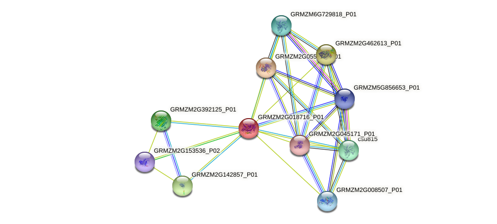 GRMZM2G018716_P01 protein (Zea mays) - STRING interaction network