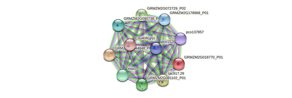 GRMZM2G018770_P01 protein (Zea mays) - STRING interaction network