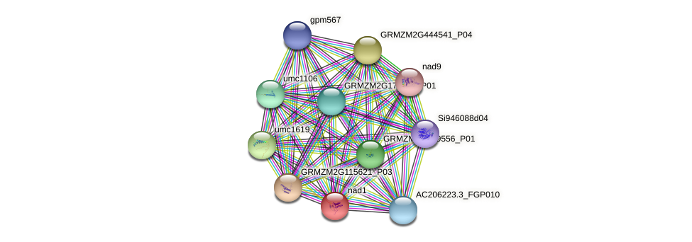 GRMZM2G018941_P01 protein (Zea mays) - STRING interaction network
