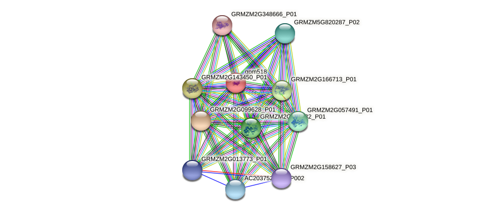 gpm518 protein (Zea mays) - STRING interaction network