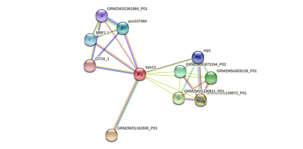 GRMZM2G019183_P02 protein (Zea mays) - STRING interaction network