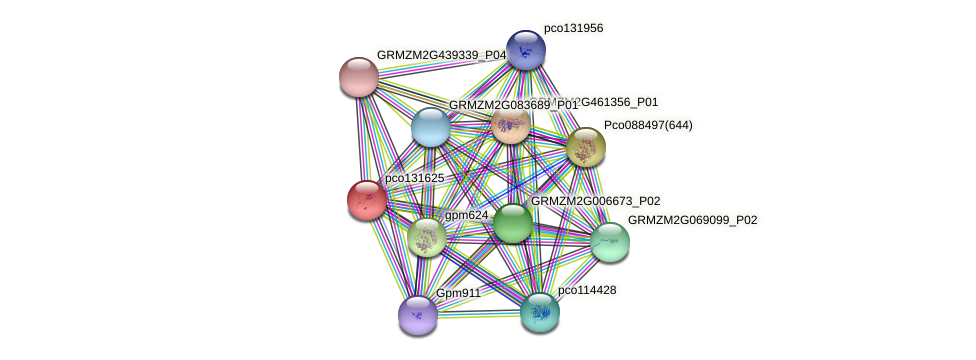 pco131625 protein (Zea mays) - STRING interaction network