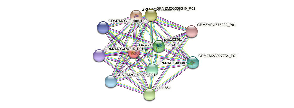 AY110019 protein (Zea mays) - STRING interaction network