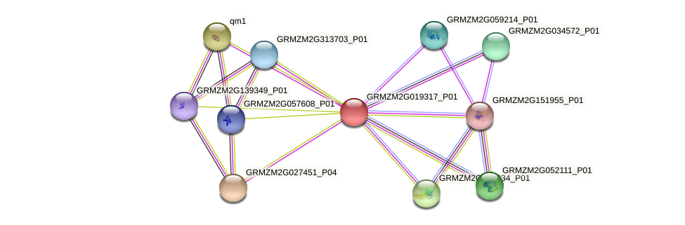 GRMZM2G019317_P01 protein (Zea mays) - STRING interaction network