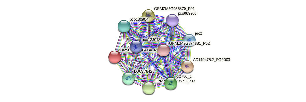 GRMZM2G019468_P01 protein (Zea mays) - STRING interaction network