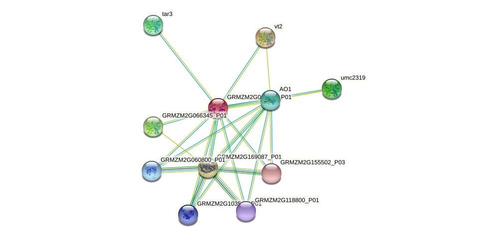 GRMZM2G019515_P01 protein (Zea mays) - STRING interaction network