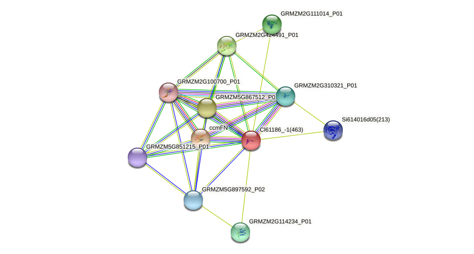 GRMZM2G019553_P01 protein (Zea mays) - STRING interaction network