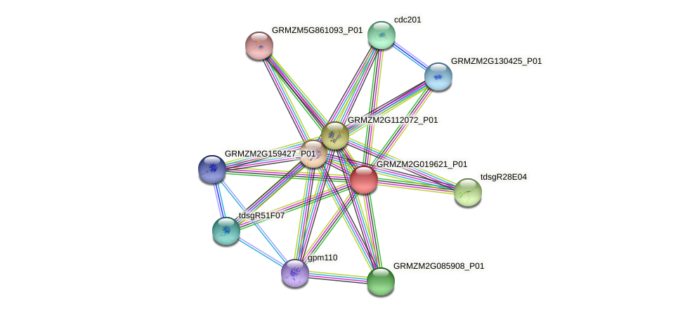 GRMZM2G019621_P01 protein (Zea mays) - STRING interaction network