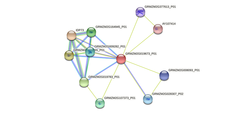 Zm.27419 protein (Zea mays) - STRING interaction network