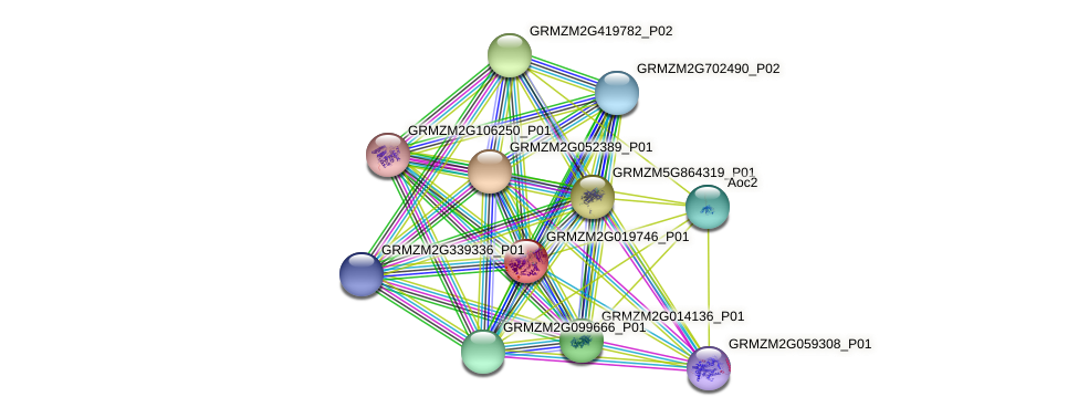 GRMZM2G019746_P01 protein (Zea mays) - STRING interaction network