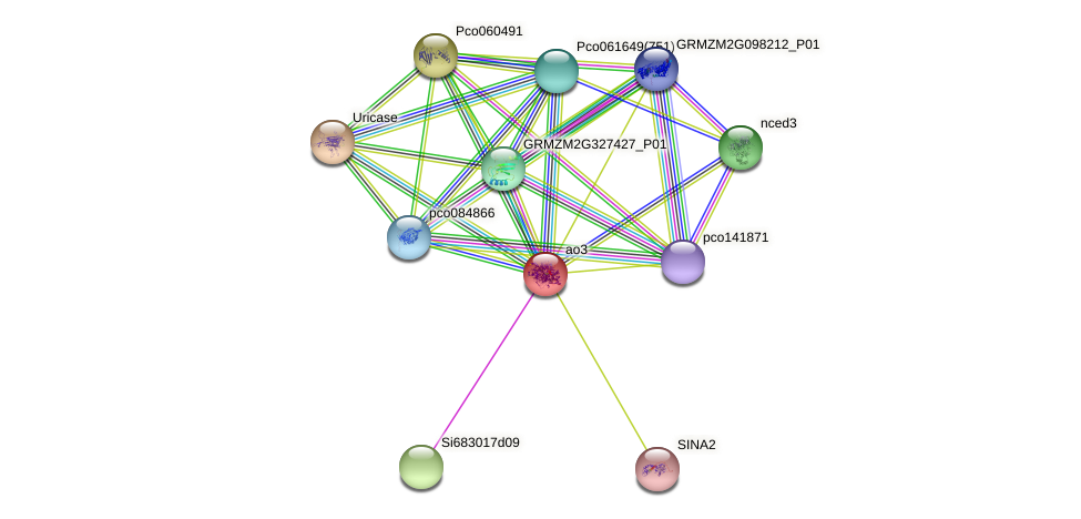 ao3 protein (Zea mays) - STRING interaction network