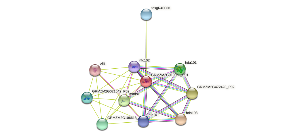 Zm.127459 protein (Zea mays) - STRING interaction network