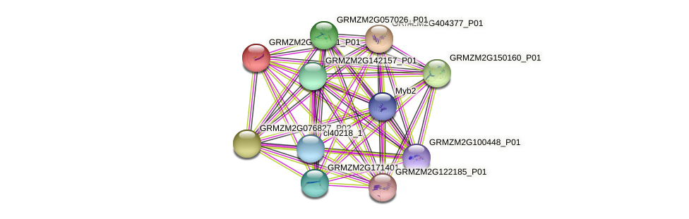GRMZM2G020191_P01 protein (Zea mays) - STRING interaction network