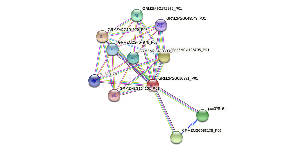 Zm.19638 protein (Zea mays) - STRING interaction network
