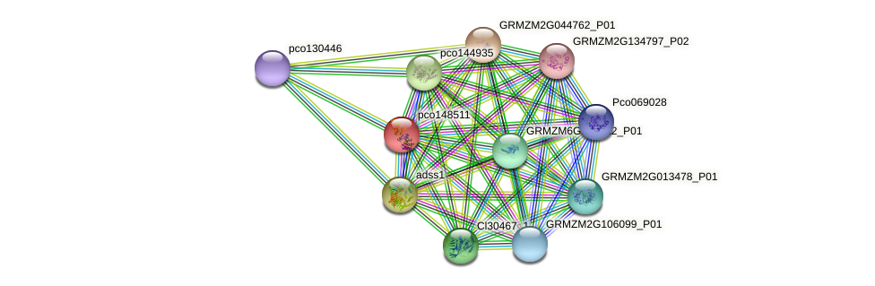 pco148511 protein (Zea mays) - STRING interaction network