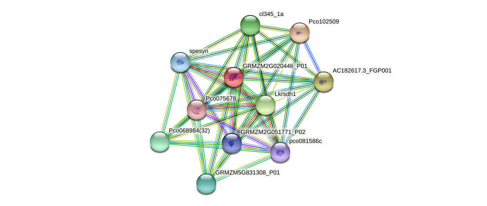 GRMZM2G020446_P01 protein (Zea mays) - STRING interaction network