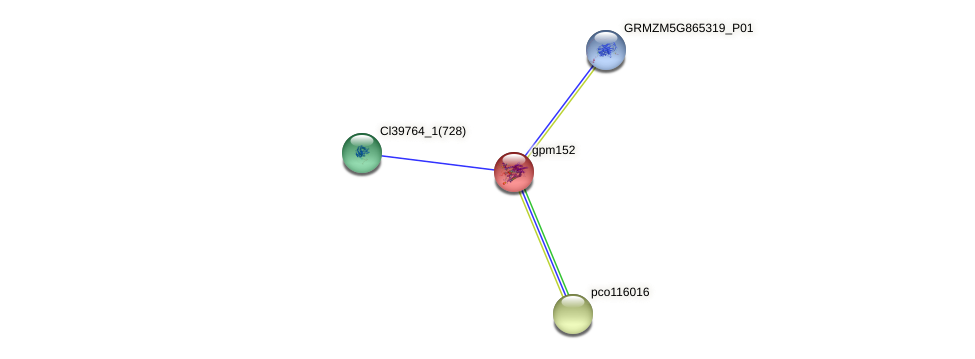 gpm152 protein (Zea mays) - STRING interaction network
