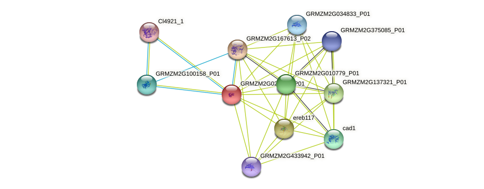 GRMZM2G020523_P01 protein (Zea mays) - STRING interaction network