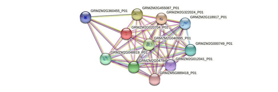 GRMZM2G020704_P02 protein (Zea mays) - STRING interaction network