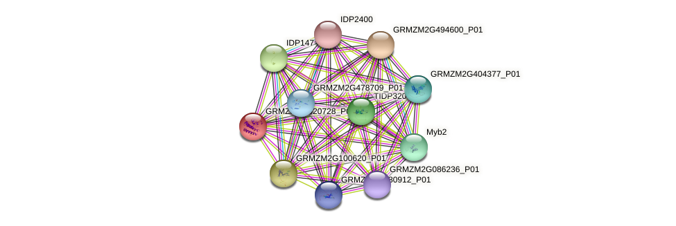 GRMZM2G020728_P01 protein (Zea mays) - STRING interaction network