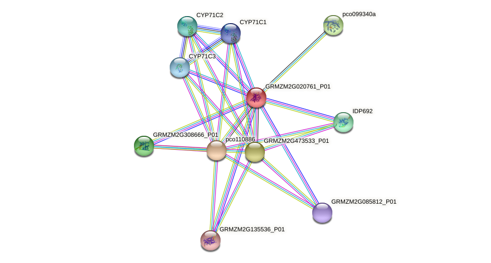GRMZM2G020761_P01 protein (Zea mays) - STRING interaction network