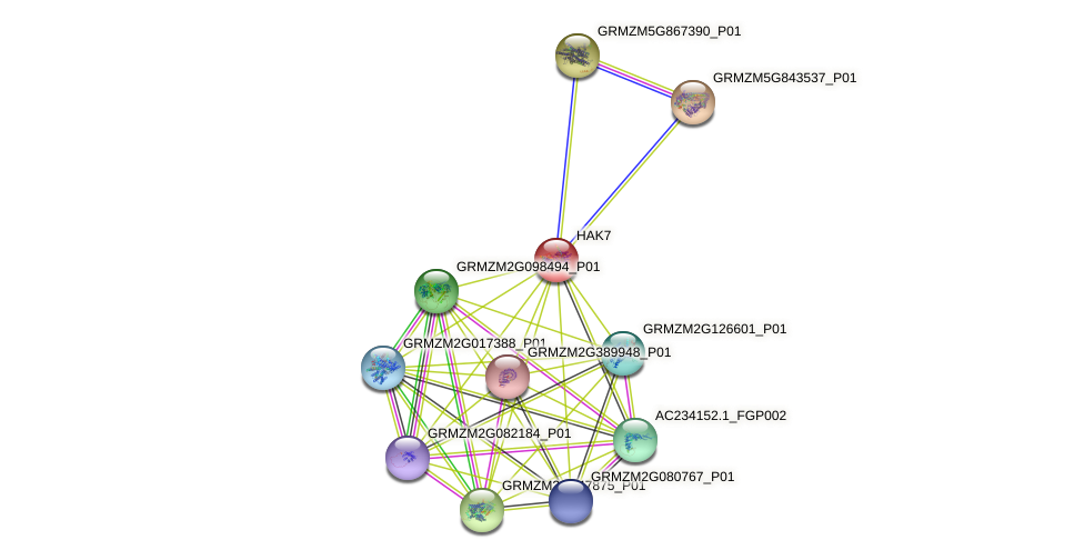 HAK7 protein (Zea mays) - STRING interaction network