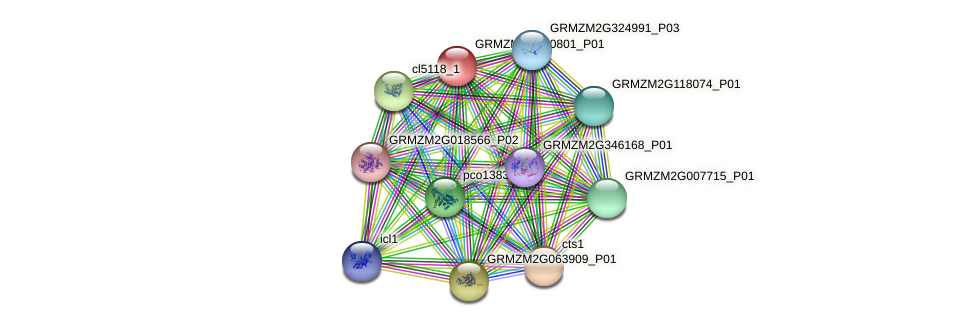 GRMZM2G020801_P01 protein (Zea mays) - STRING interaction network