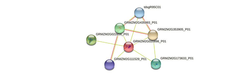 GRMZM2G020898_P01 protein (Zea mays) - STRING interaction network